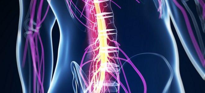 Показания к проведению МРТ спинного мозга