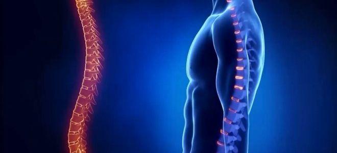 Что показывает и как проводится рентген позвоночника