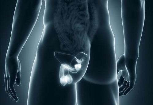 Диагностика болезней мошонки методом МРТ