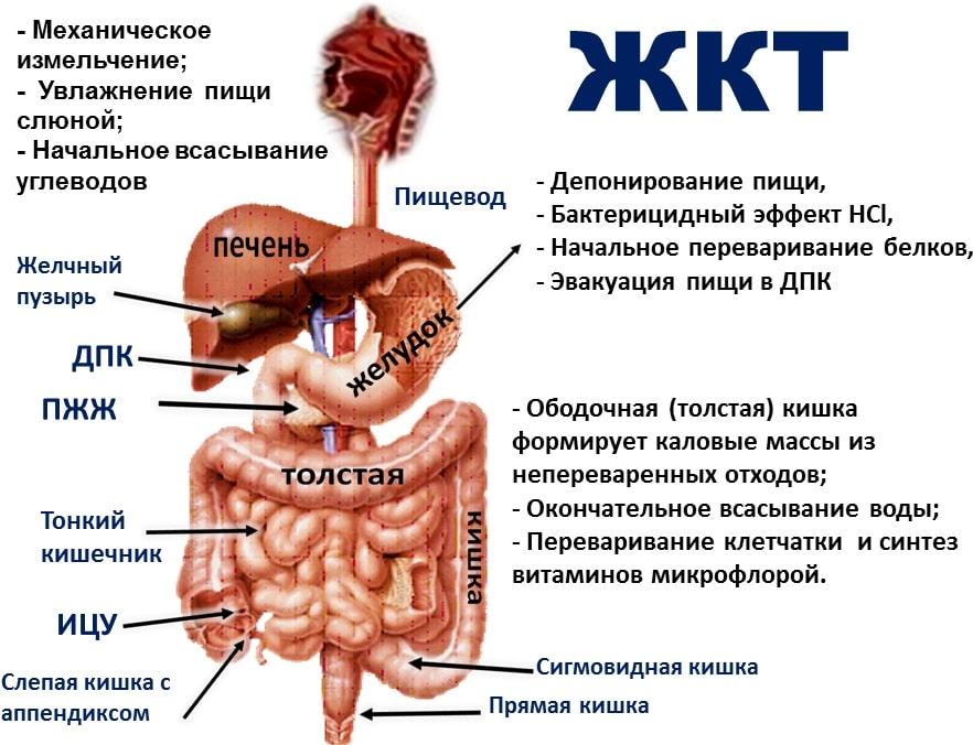 КТ-диагностика заболеваний кишечника: показания, подготовка, ход исследования
