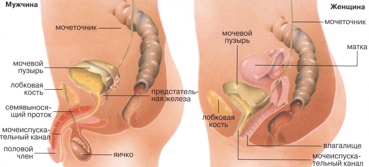 МРТ органов малого таза у женщин и мужчин: подготовка к обследованию