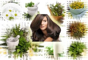 травы для волос от выпадения какие отвары нужно пить отзывы рецепты