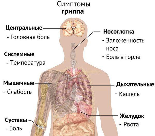 Грипп у взрослых: первые симптомы и лечение