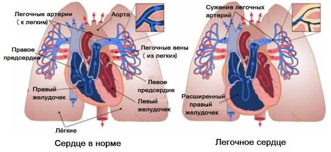Анатомические особенности сосудистых структур