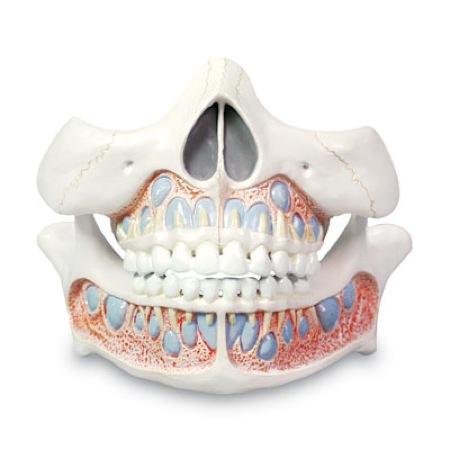 Виды диагностики рентгена зубов ребенка