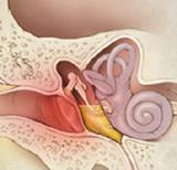 Причины перхоти в ушах