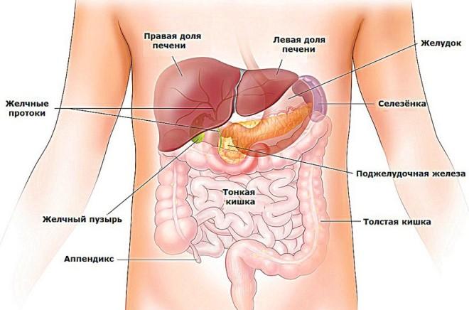 Расположение поджелудочной железы в брюшной полости