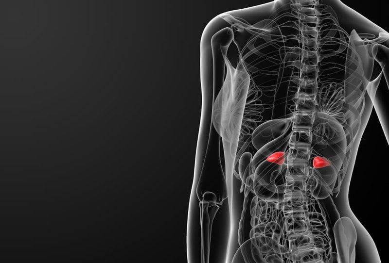 Как делают МРТ надпочечников: показания, альтернативные методики