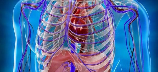 Как делают МРТ грудной клетки, показания и противопоказания