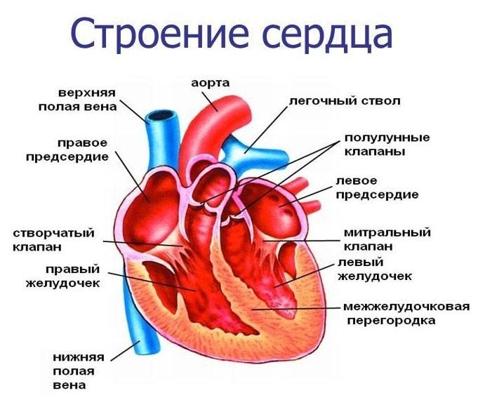 Рентгенограмма сердца: снимки с патологиями