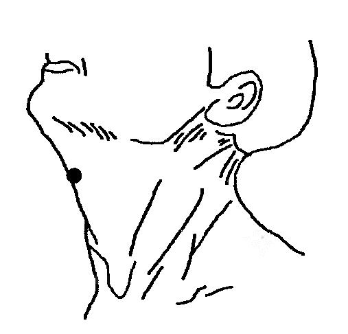 Втирание и массаж данной точки помогает уменьшить симптомы воспаления при ангине