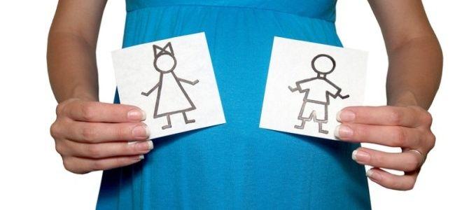 Можно ли на скрининге в первом триместре узнать пол ребенка