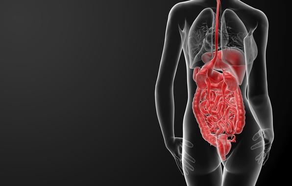 МРТ или КТ брюшной полости: отличия методов