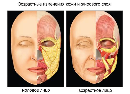 Механизм изменения овала лица