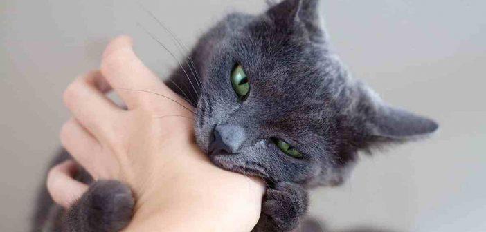 кот укусил